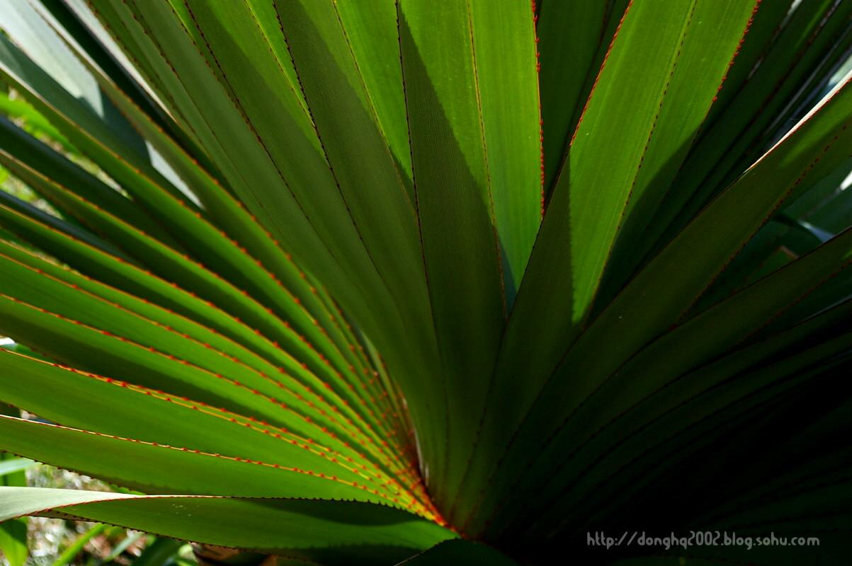 海南之旅第二天:大海沙滩美女椰树